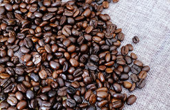 Coffee bean. On grey background stock photography