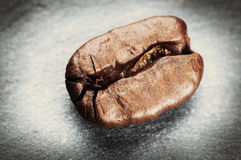 Coffee bean on grey background Stock Image