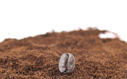 Coffee bean with ground coffee Royalty Free Stock Images