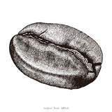 Coffee bean hand drawing engraving illustration. Clip art isolated on white background Royalty Free Stock Images