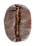 Coffee bean isolated Stock Photography