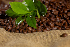 Coffee bean and leaves Royalty Free Stock Image