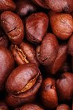 Coffee bean in macro. Extreme closeup Stock Image