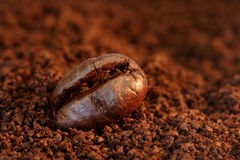 Coffee Bean Macro. Macro of a coffee bean in roasted coffee grounds Royalty Free Stock Images