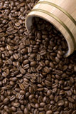 Coffee bean out of oak drum Stock Image