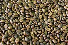 Coffee bean pattern Stock Image