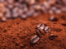 Coffee bean. In coffee powder close up Royalty Free Stock Photo