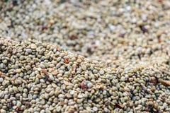 Coffee bean raw Royalty Free Stock Photography