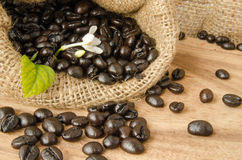 Coffee bean in sack Royalty Free Stock Image