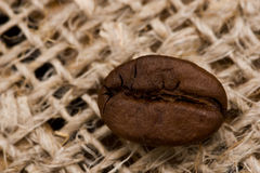 Coffee bean on sacking texture Royalty Free Stock Photos