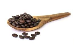 Coffee bean seed. stock photography