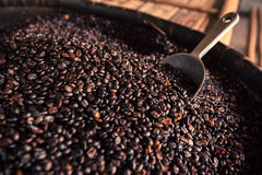 Coffee bean with stainless big bowl spoon. Royalty Free Stock Image