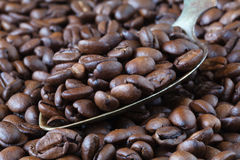 Coffee Bean with a stainless steel Spoon Royalty Free Stock Images