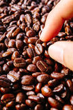 Coffee bean texture. Putting a Coffee bean with finger royalty free stock images