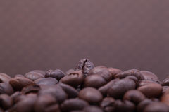 Coffee Bean with white background Royalty Free Stock Images