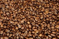 Coffee beans. Plenty of coffee / espressoo beans Royalty Free Stock Photos