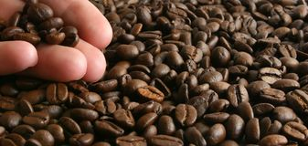 Coffee beans. On the hand Royalty Free Stock Photos