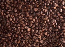 Coffee beans. Mass of roasted coffee beans Stock Images