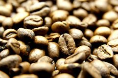 Coffee beans. Coffee of fresh natural beans Stock Images