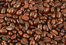 Coffee Beans. Natural french roast coffee beans background texture Royalty Free Stock Photo