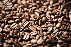 Coffee Beans. Close up of coffee beans, with shallow depth of field stock photo
