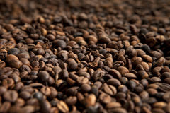 Coffee beans. Pile of roasted coffee beans close up Stock Photography