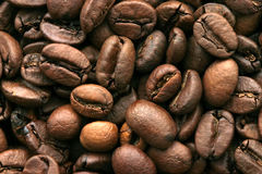Coffee beans. Texture of bunch of coffee beans Royalty Free Stock Photo