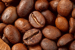 Coffee Beans. Studio Shot of Coffee Beans Royalty Free Stock Photography