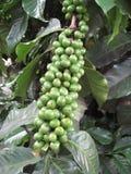 Coffee Beans 2 Stock Photos