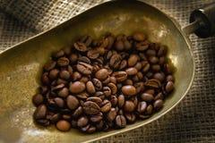 Free Coffee Beans Royalty Free Stock Photos - 20589008