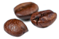 Coffee Beans. Three coffee beans on a white background with low depth of field Royalty Free Stock Images