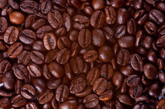 Coffee Beans. Background made of coffee beans Stock Images