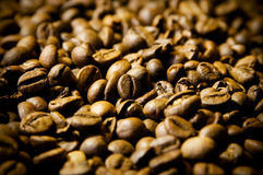 Coffee Beans. Lots of fresh coffee beans Stock Image