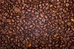 Coffee Beans. Background. Fresh . Coffee Plantation Royalty Free Stock Image