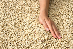 Coffee beans and hand Royalty Free Stock Image