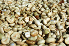 Coffee beans. Arabica coffee beans, best coffee beans Stock Image