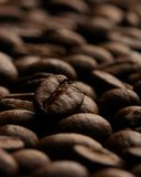 Coffee Beans. Up Close With Stark Lighting Stock Image