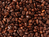 Coffee Beans. Background with roasted natural seeds for brewing espresso or cappuccino as a natural food concept with a java blend of different types of roasts Royalty Free Stock Image