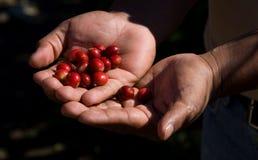 Free Coffee Beans Royalty Free Stock Photos - 4244048