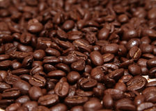 Coffee beans. Scattered coffee beans with selective focus Stock Images