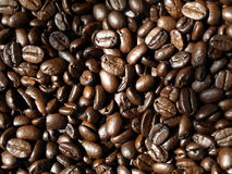 Coffee Beans. A pile of rich dark coffee beans stock photos