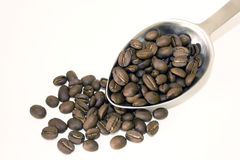 Free Coffee Beans Stock Photos - 5984463