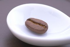 Coffee beans. On the white teaspoon Stock Images
