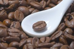 Coffee beans. In white teaspoon Royalty Free Stock Images