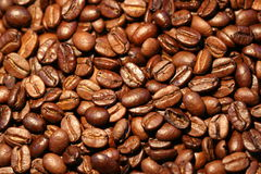Coffee-beans. 100% Arabica-beans stock image