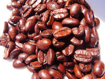 Coffee Beans. In the sun stock photos