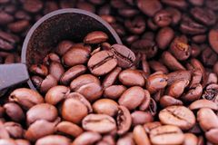 Coffee Beans. Background Royalty Free Stock Photos