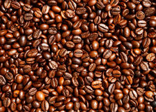 Coffee beans. Many coffee beans Royalty Free Stock Images