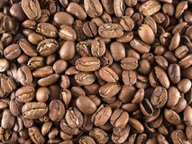 Coffee beans. Photo of roasted coffee beans (Nicaragua Royalty Free Stock Photography