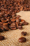 Coffee beans. On burlap for designers Stock Photography
